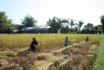 Harvest at �The Land� 